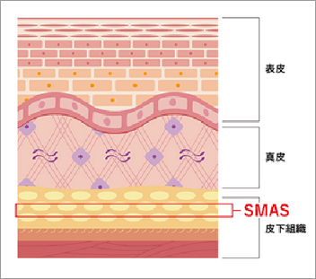 SMAS層(表在性筋膜)